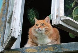Падение кошек из окна!